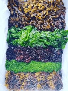 Seaweed box